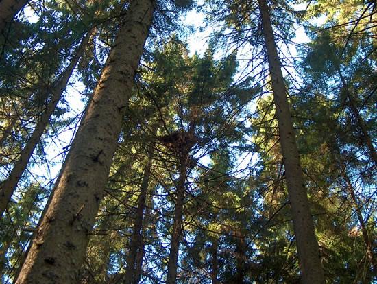 Skog og tretopper